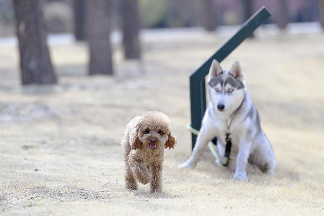 Animal, Dog, Cute, Pets