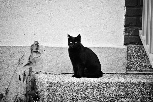 Cat, Feline, Black, Animal, Domestic Animal, Cat Eyes
