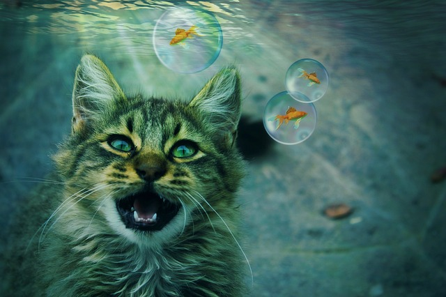 Cat, Animal, Fantasy, Dream, Dream World Gold Fish