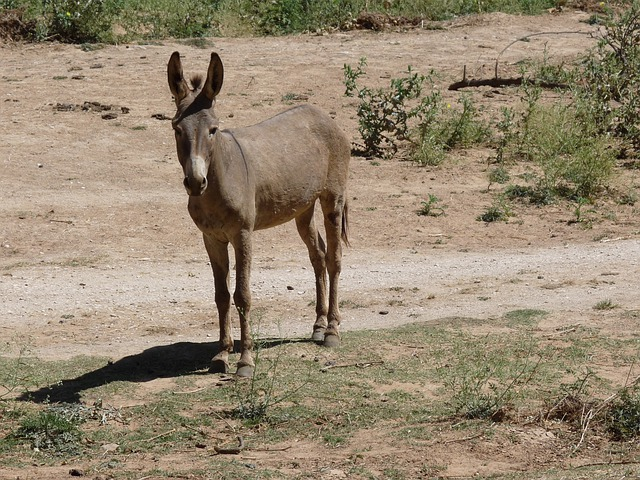 Donkey, Bauer, Agriculture, Animal, Head, Ears, Rural