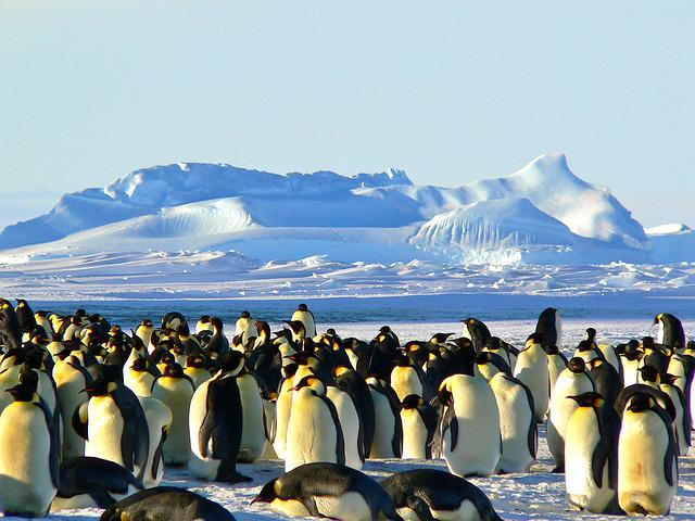 Emperor Penguins, Antarctic, Life, Animal, Ice