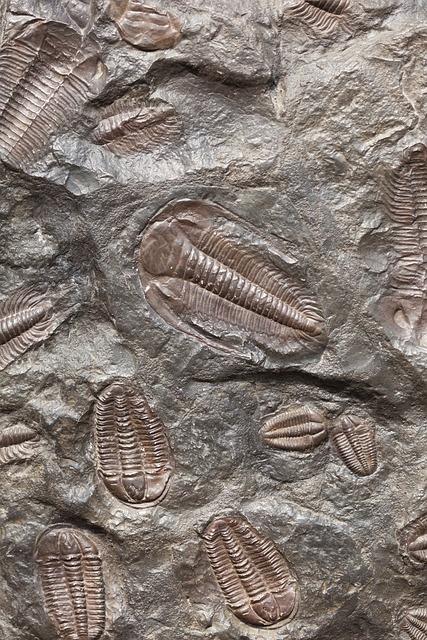 Ancient, Animal, Biology, Evolution, Extinct, Fossil