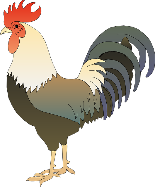 Animal, Barnyard, Bird, Chicken, Farm, Hen, Poultry