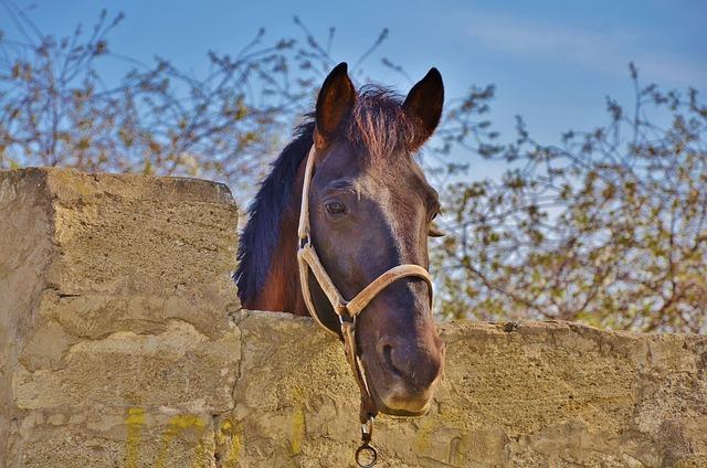 Horse, Animal, Farm, Mammal, Stallion, Horseback, Head