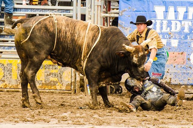 Livestock, Bull, Mammal, Animal, Rodeo, Cowboy, Fauna