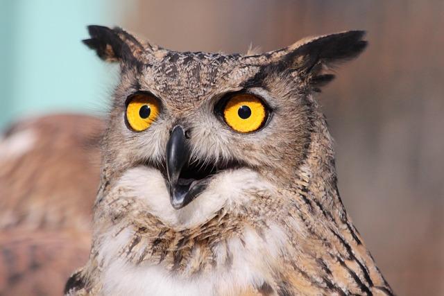 Owl, The Female Eagle Owl, Bird, Feathered Race, Animal