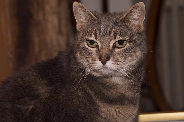Cat, Animal, Cat Eyes, Feline, Domestic Animal