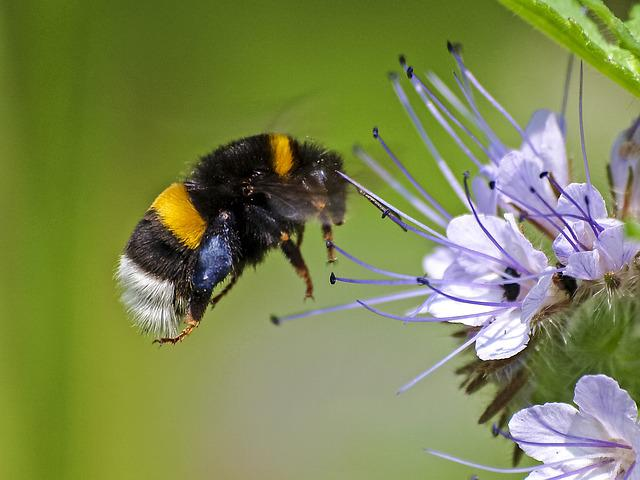 Fictional, Hummel, Insect, Nature, Animal