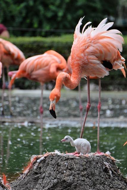 Flamingo, Zoo, Animal, Water Bird, Pink Flamingo, Bird