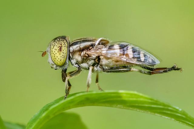 Insect, Macro, Fly, Animal, Nature, Magnification