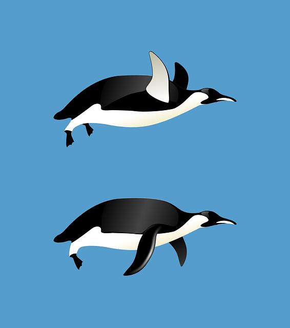 Penguins, Flying, Animal, Blue, Fly, Sky, Winged