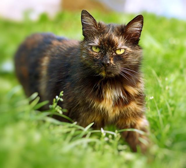 Animal, Domestic Cat, Fur, Coat, Look