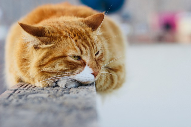 Cute, Animal, Cat, Pet, Fur