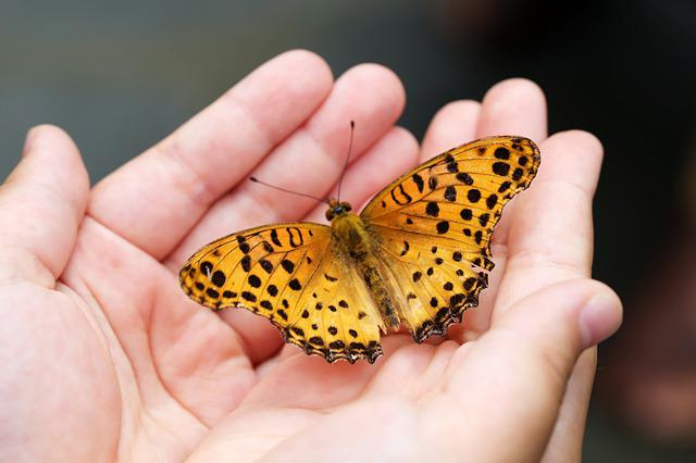 Butterfly, Insects, Nature, Animal, Wing, Hand, Free