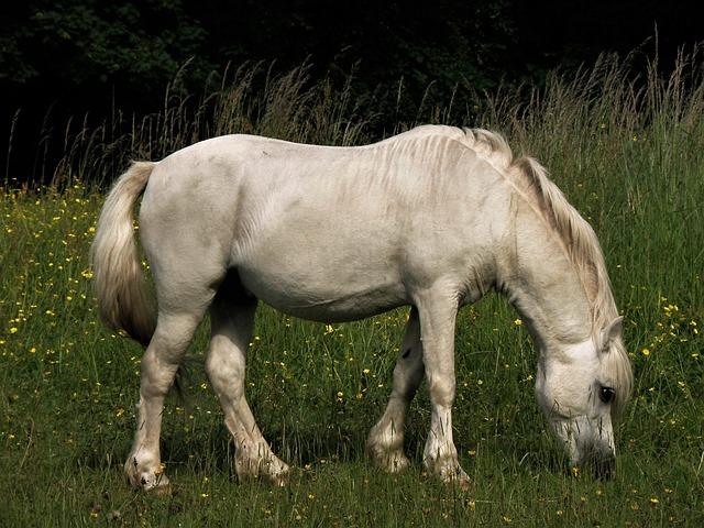 Mammal, Farm, Animal, Pasture, Hayfield, Mare, Horse