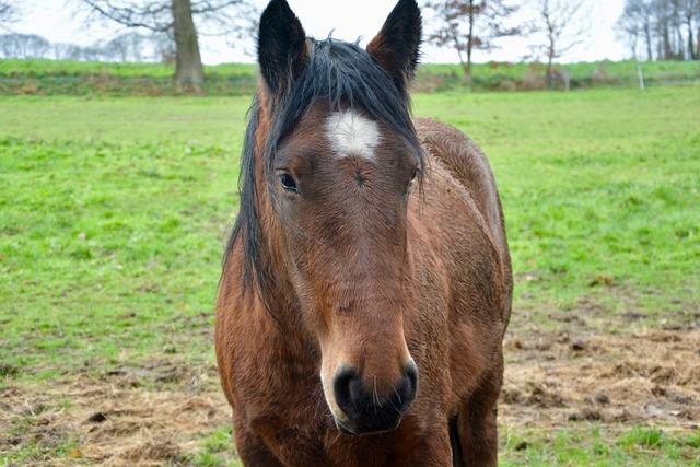 Horse, Head Horse, Ears White, Portrait, Animal