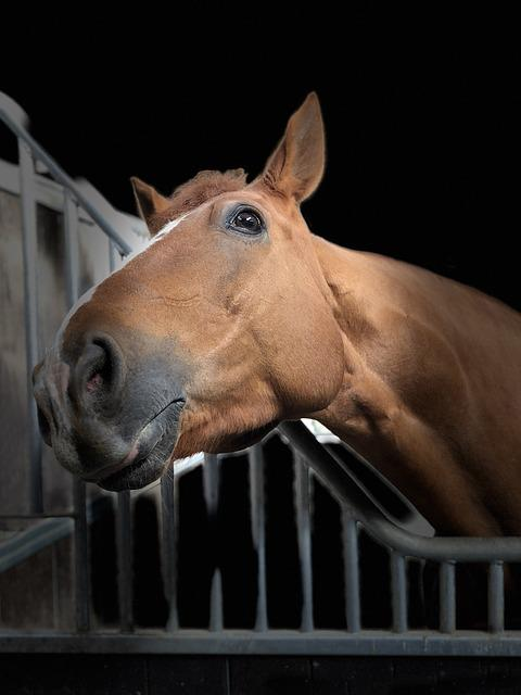 Horse, Head, Portrait, Listing, Animal