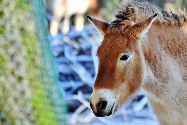 Donkey, Mule, Muli, Livestock, Animal, Zoo, Head