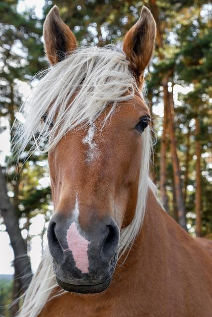 A Workhorse, Portrait, Head, Horse, Mane, Animal