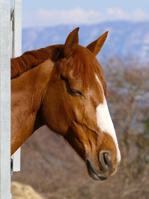 Horse, Sleeps, Head, Portrait, Sun, Animal