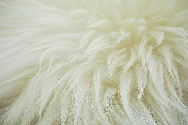 Fleece, Hide, Wool, Sheep, Fluffy, Animal Hide