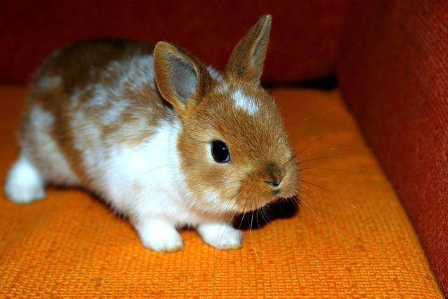 Bunny, Decorative, Home, Animal