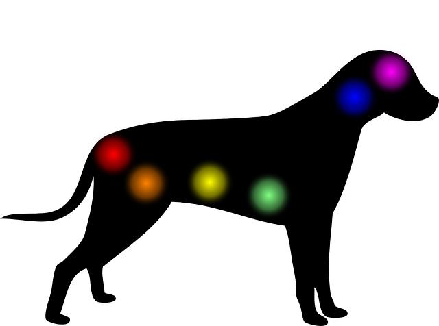 Aura, Chakra, Dog, Animal, Homeopathy, Medical