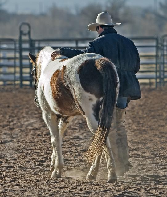 Cowboy, Horse, Pony, Western, Animal, Ranch, Country