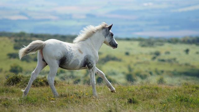 Wild Horse, Horse, Nature, Mammal, Animal, Mustangs