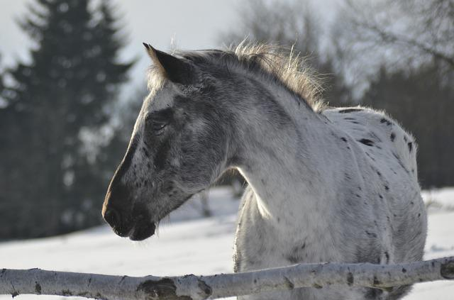 Horse, Animal, Outdoors