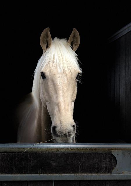 Horse, Head, Portrait, Face, Palomino, Animal