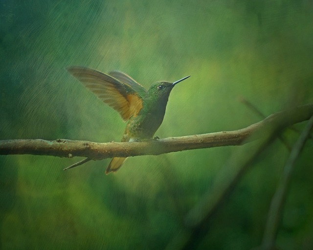 Texture, Background, Hummingbird, Bird, Animal, Nature