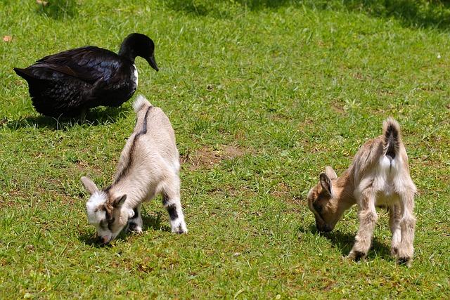 Petting Zoo, Kid, Duck, Boy, Animal