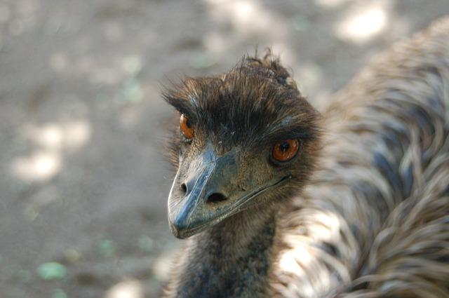 Wildlife, Nature, Animal Kingdom, Bird, Ostrich