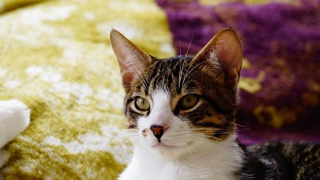 Cats, Kittens, Feline Look, Animal, Cat, Puppy