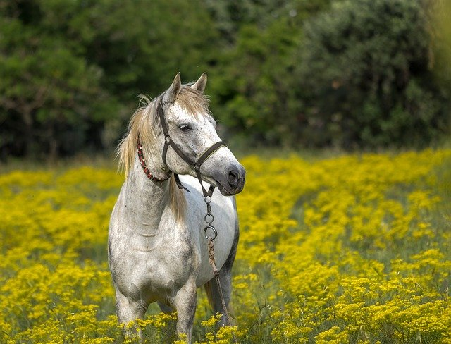 Horse, Meadow, Spring, Animal, Landscape, Nature