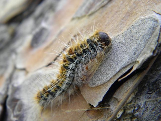 Nature, Animal, Wildlife, Closeup, Insect, Larva