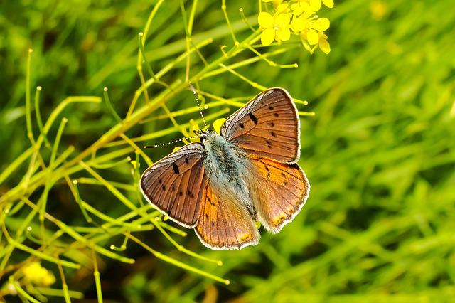 Animal, Insect, Butterfly, Hey A Haze, Lawn, Flowers