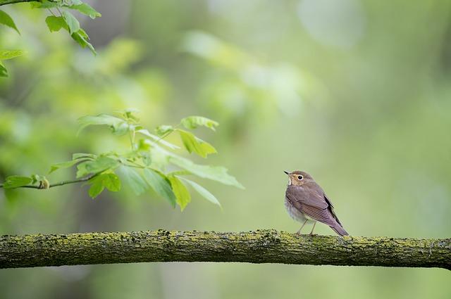 Animal, Bird, Leaves, Nature, Perched, Tree, Wood