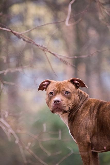 Animal, Mammal, Nature, List Dog