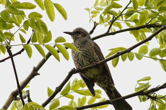 Animal, Woods, Plant, Wood, Wild Birds, Little Bird