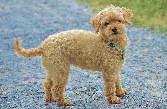 Dog, Animal, Pet, Cute, Puppy, Mammal, Doggy, Little