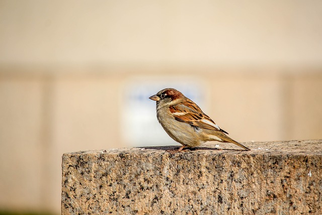Nature, Bird, Wildlife, Animal, Little, Sparrow