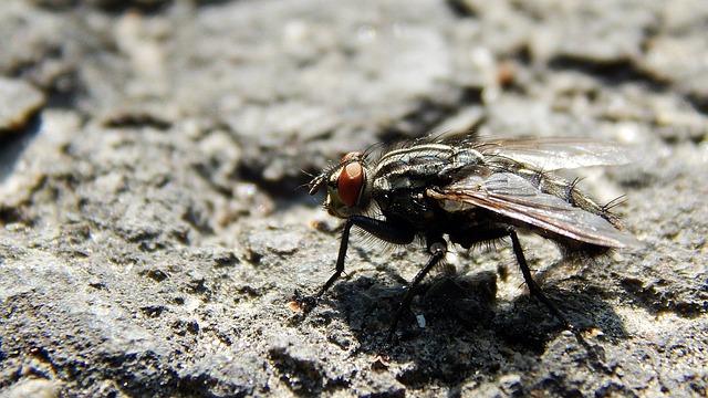 Nature, Animal, Wild World, Insect, Little, Macro