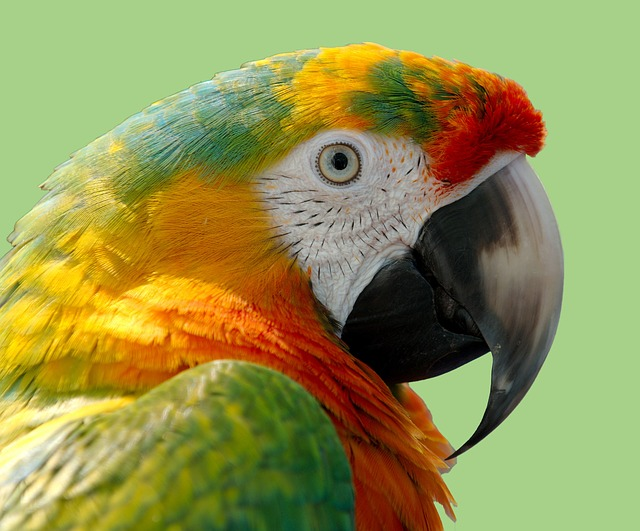 Parrot, Macaw, Bird, Nature, Wild, Animal, Colorful
