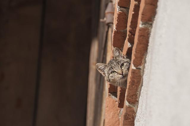 Cat, Farm Cat, Curious, Young Cat, Animal, Mackerel