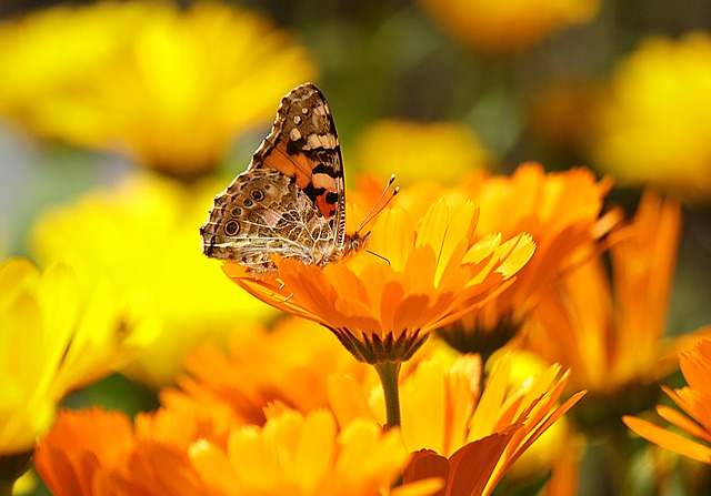 Butterfly, Yellow, Insect, Nature, Animal, Macro