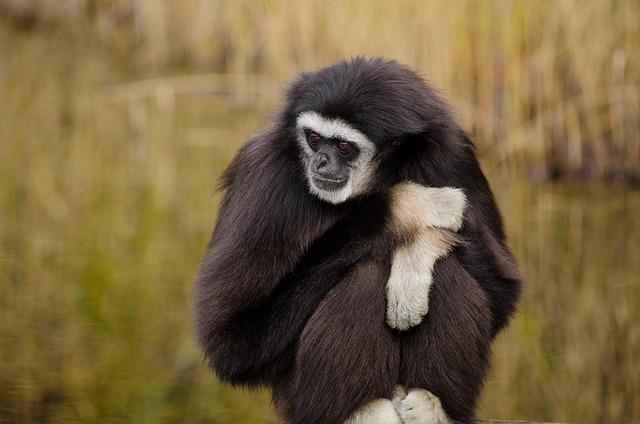 Mammal, Animal World, Monkey, Primate, Animal