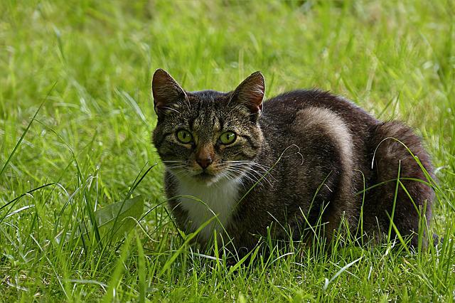 Animal, Mammal, Cat, Domestic Cat