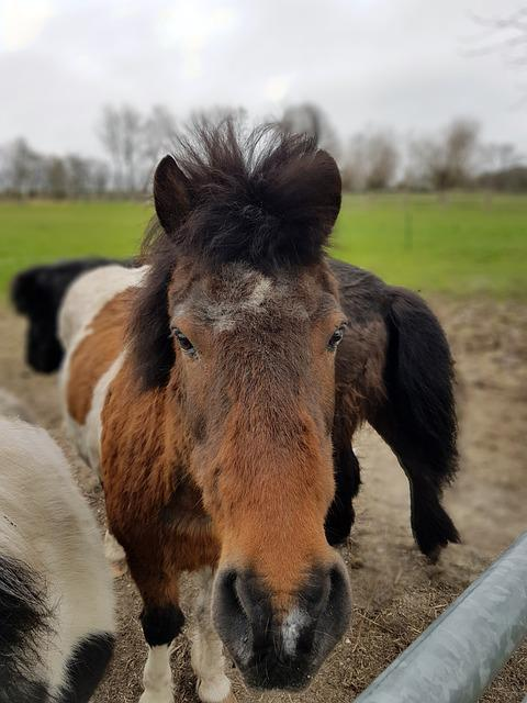 Mammal, Animal, Farm, Animals, Cavalry, Horse